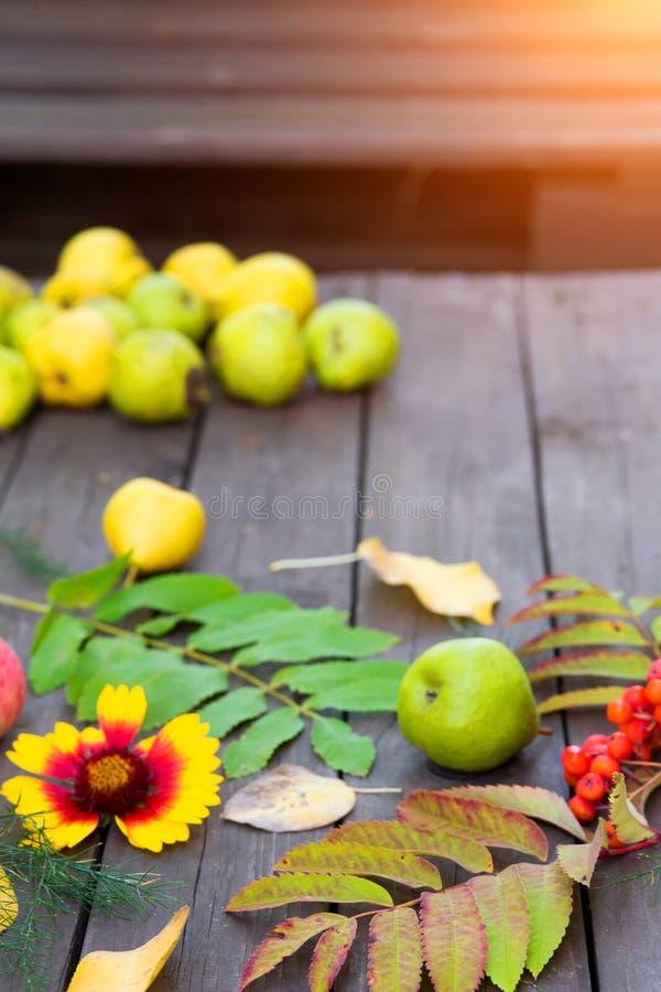 HöstskördCloseup av färgrika sidor, rönnbär, äpplen med päron på en trätabell royaltyfria bilder