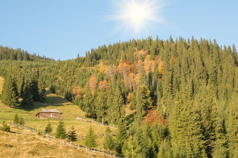 Höstskog i bergen royaltyfria foton
