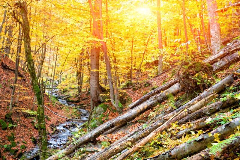 Höstskog i bergen arkivfoto