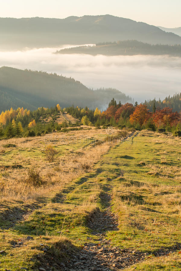 Höstskog i bergen arkivbild