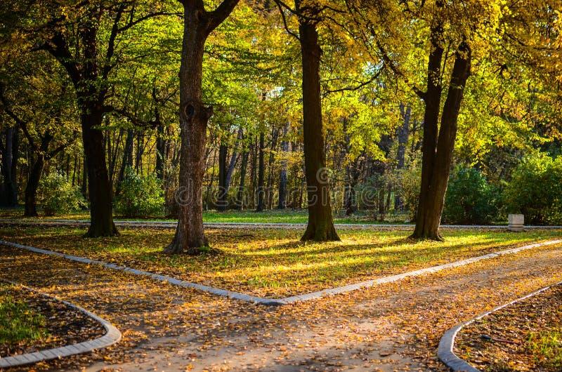 Höstskog med två banor royaltyfri bild