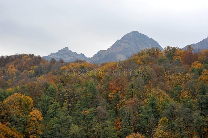 Höstskog- och bergsikter i Rosa Khutor royaltyfri foto