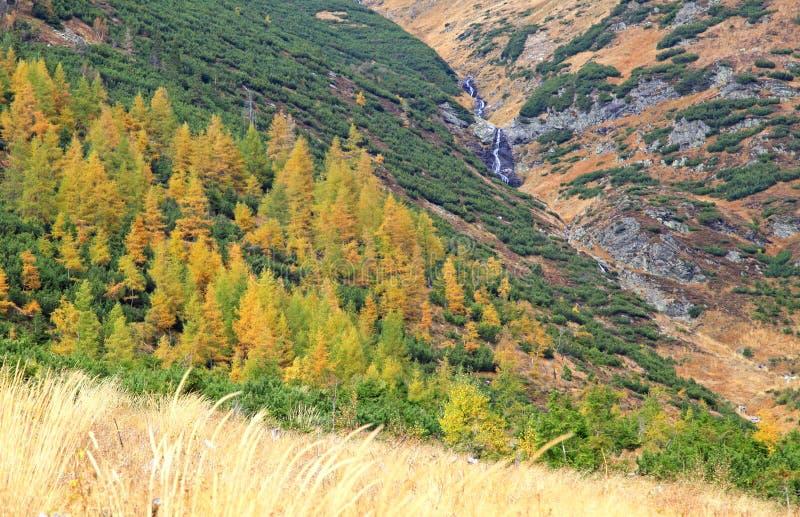Höstskog på den Ziarska dolinaen - dal i höga Tatras, Slovaki arkivbilder