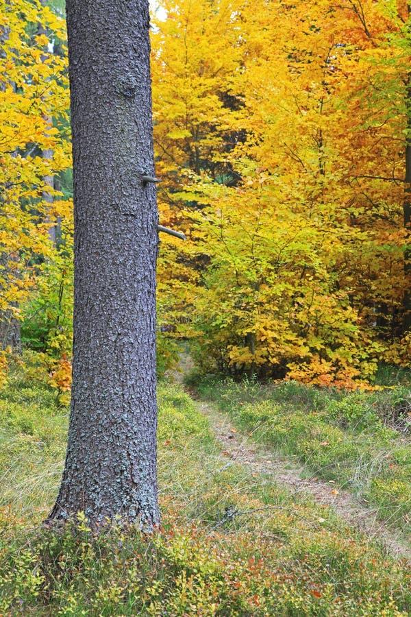 Höstskog på den Ziarska dolinaen - dal i höga Tatras, Slovaki royaltyfria foton