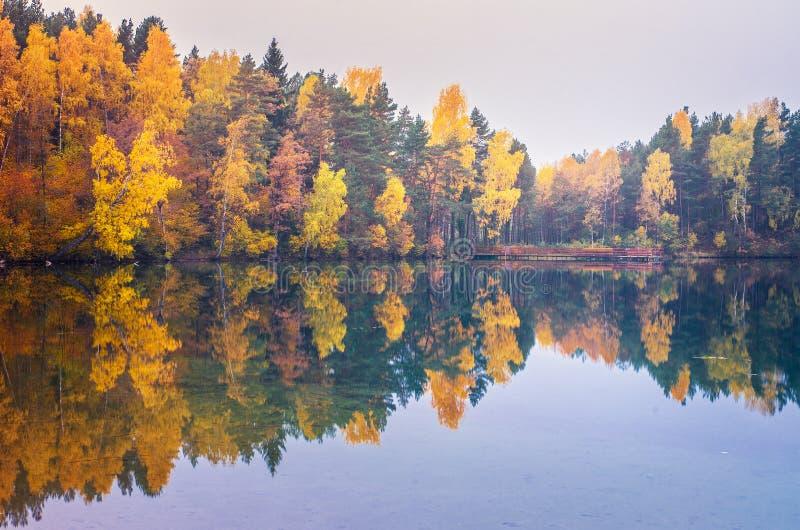 Höstskog reflekterad på sjön arkivfoto
