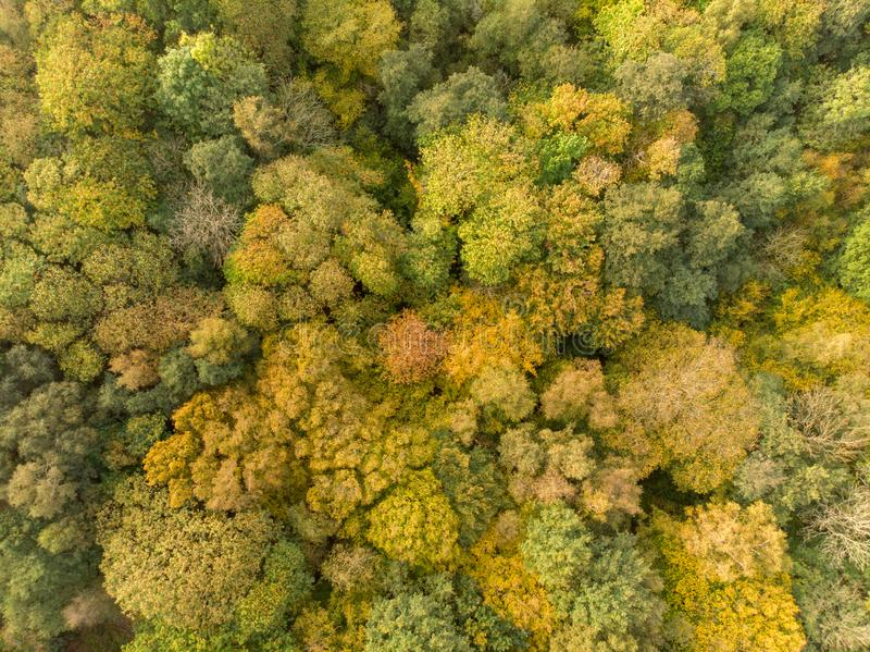 Höstskog som ses från över royaltyfri foto
