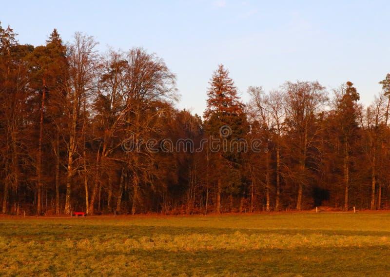 Höstskog som tänds av inställningssolen fotografering för bildbyråer