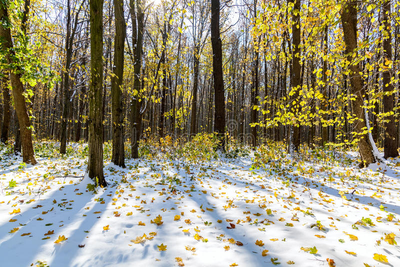Höstskog under första snö för ligganderussia för 33c januari ural vinter temperatur royaltyfri foto