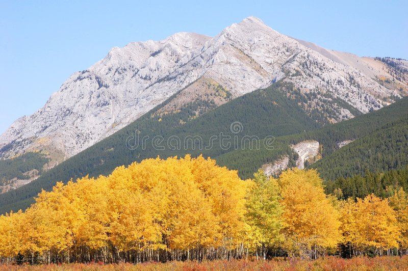 Höstskogar i rockies royaltyfria foton