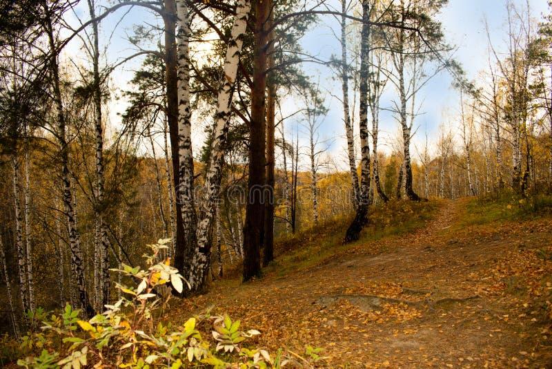 Höstskogeftermiddagen går i natur fotografering för bildbyråer