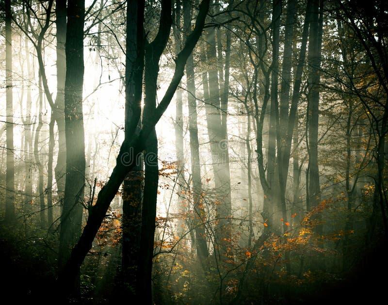 Höstskogen arkivfoto