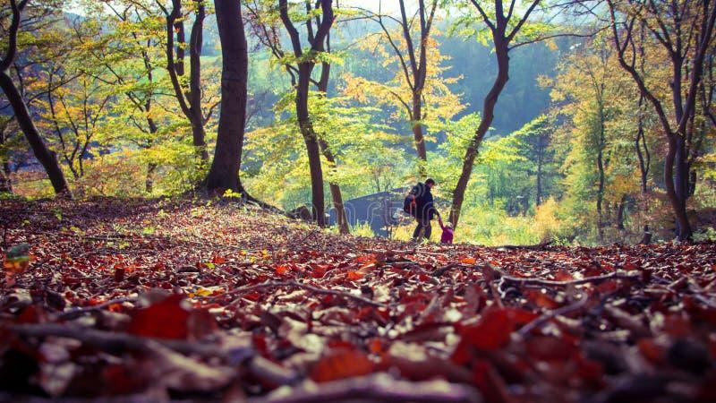 Höstskoghöst i Tyskland royaltyfri bild