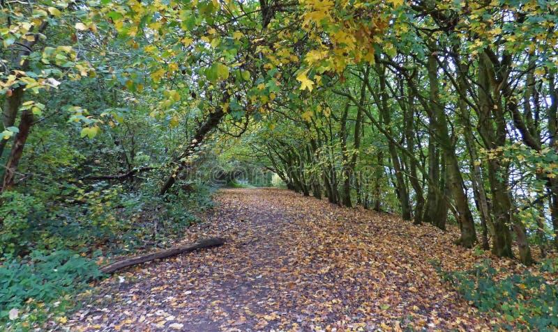 Höstskoglandet parkerar - gå i Förenade kungariket arkivfoto