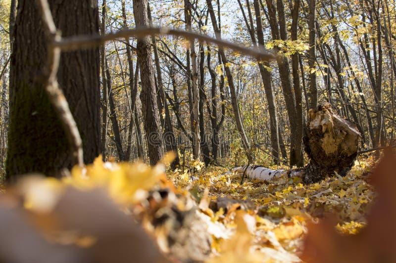 Höstskoglandskap med djup bokeh och reflexion arkivfoto