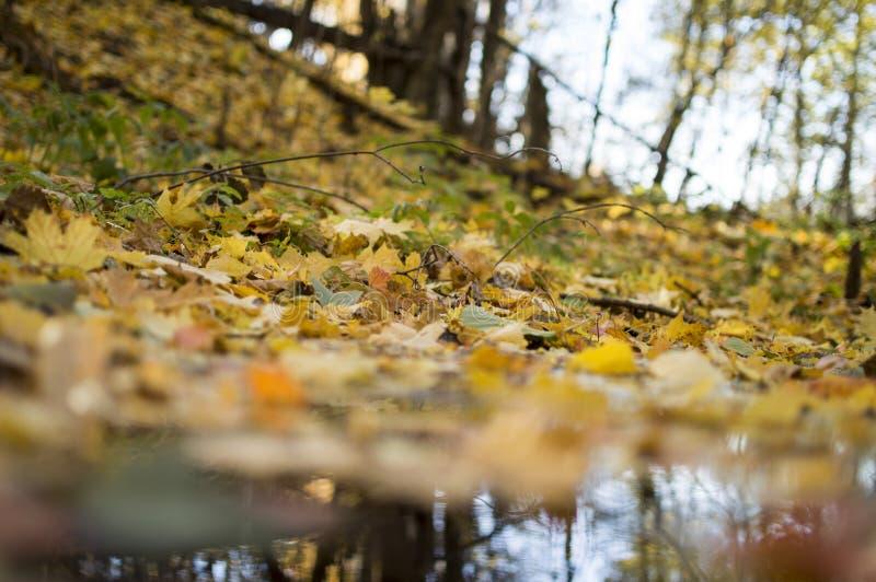 Höstskoglandskap med djup bokeh och reflexion royaltyfri foto