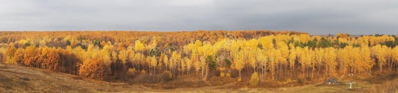 Höstskogoktober panorama royaltyfri foto
