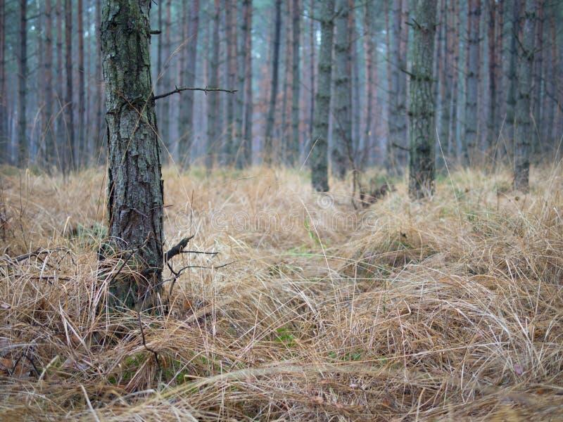 Höstskogplats arkivfoton