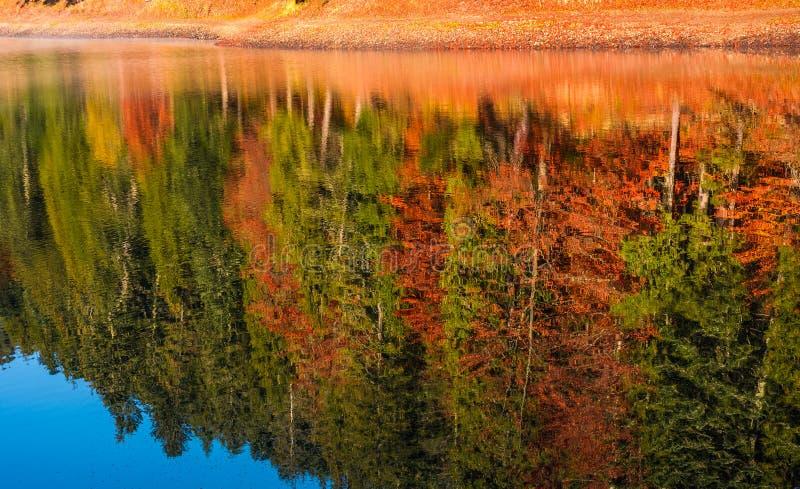 Höstskogreflexion i sjön arkivbild