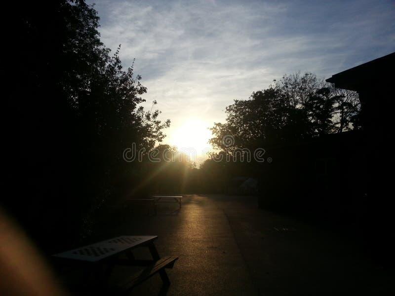 höstskogromania solnedgång arkivfoton