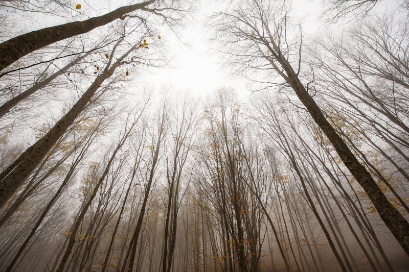 Höstskogträd royaltyfria bilder