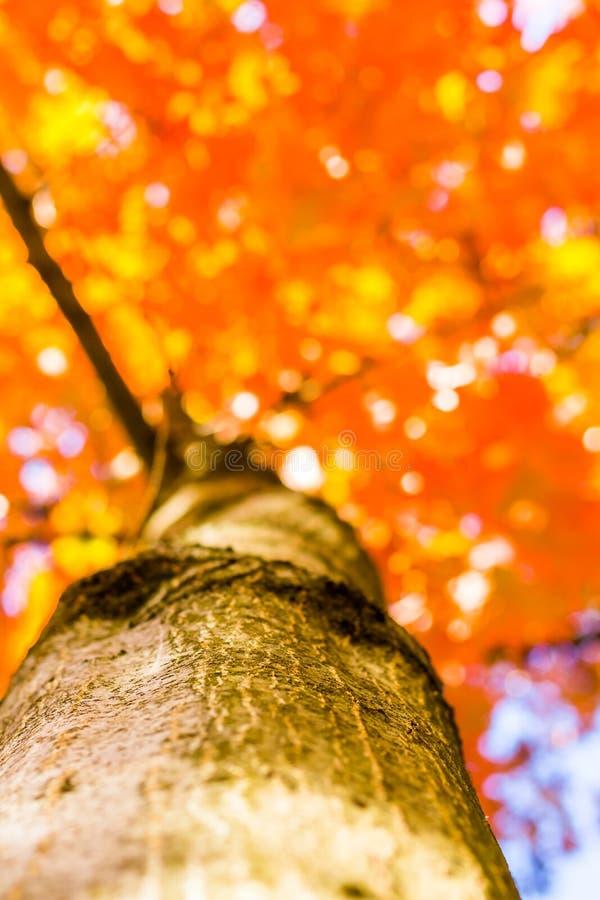 Höstskogträd från botten gröna wood solljusbakgrunder för natur, mjuk fokus! grunt djup av fältet royaltyfria bilder