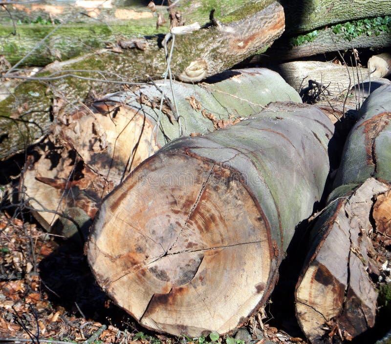 Höstskogtvärsnitt av trädstammen arkivbild