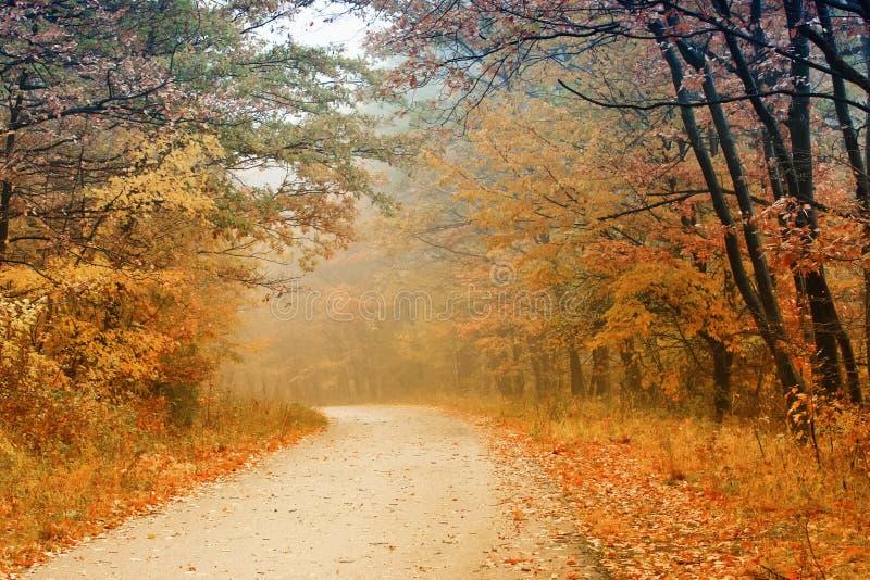 höstskogväg arkivfoton