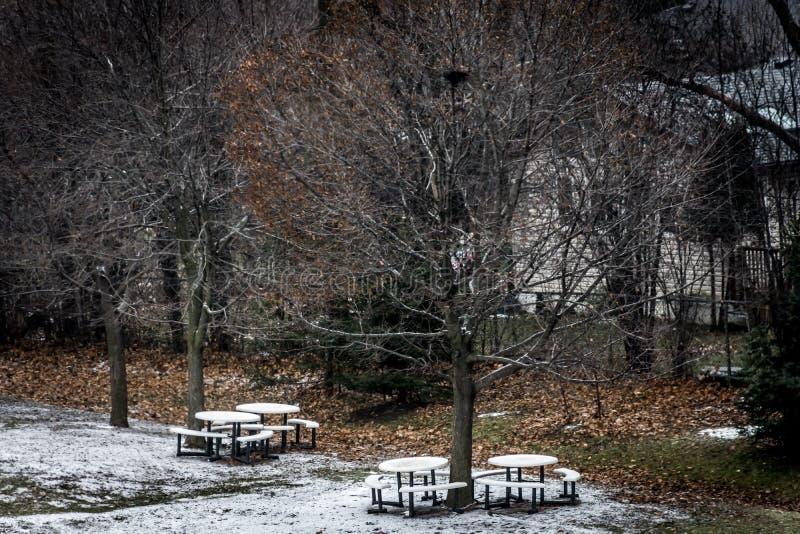 Höstsnötäckt område i fotografering för bildbyråer