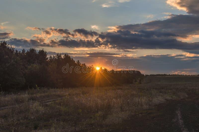 Höstsolnedgången, strålar, över ett fält, över blasten av sörjer träd, mot bakgrunden av en molnig himmel och moln arkivbild