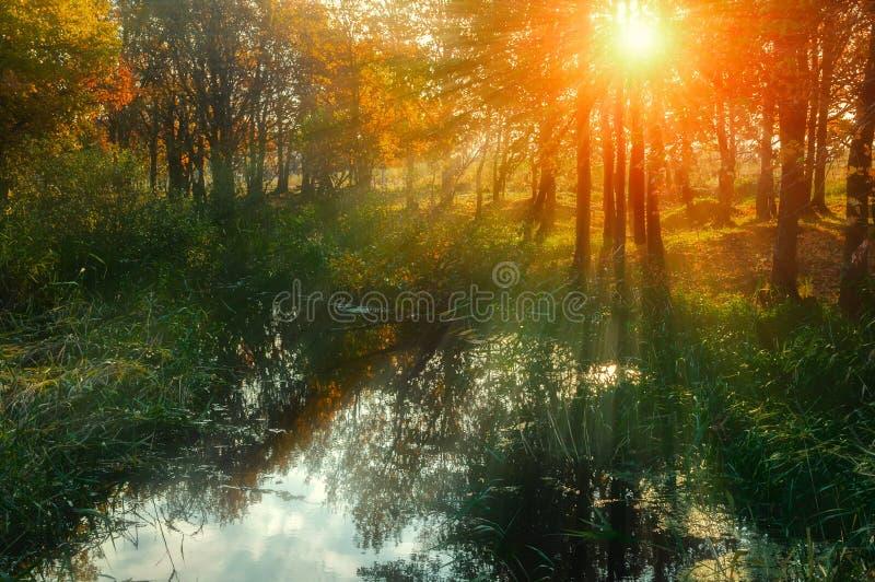 Höstsolnedgånglandskap - skogträd nära dammet royaltyfria bilder