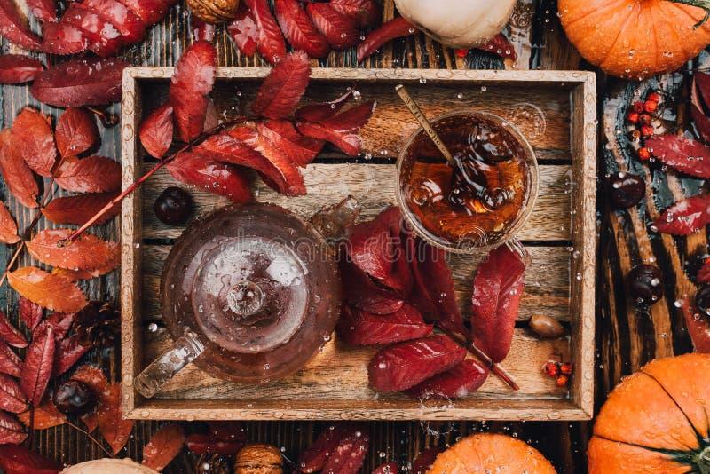 Höststilleben med den glass tekoppen och kokkärlet i trämagasin med röda sidor, pumpor och squashar royaltyfri bild