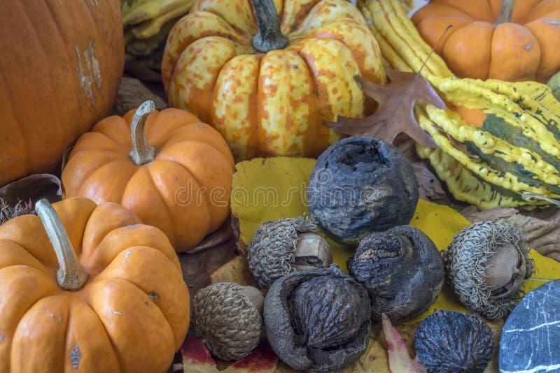 Höststudioplats av hösten royaltyfri fotografi