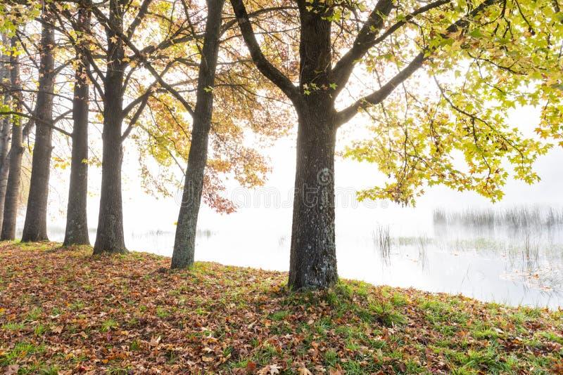 Höstträd bredvid dammet arkivfoto