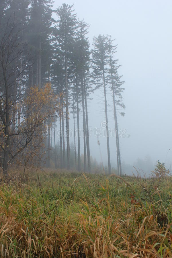 Höstträd i dimman royaltyfri fotografi
