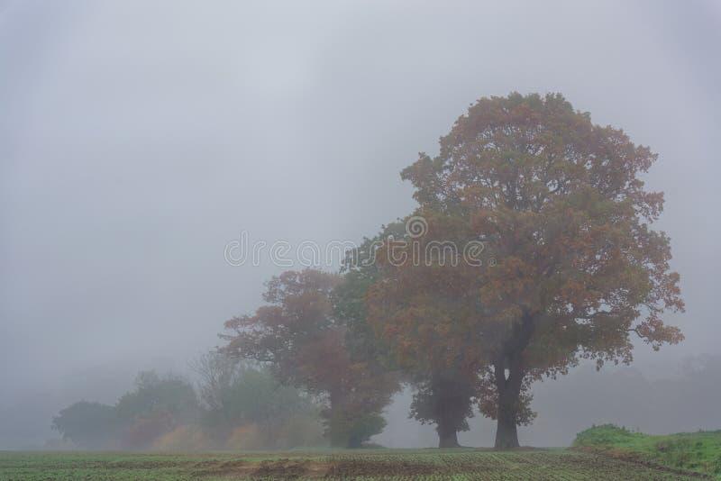 Höstträd i mist royaltyfria foton