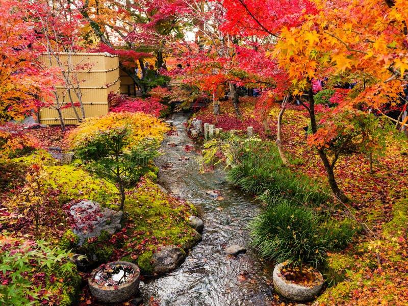 Höstträdgård på Eikando, Kyoto arkivfoto