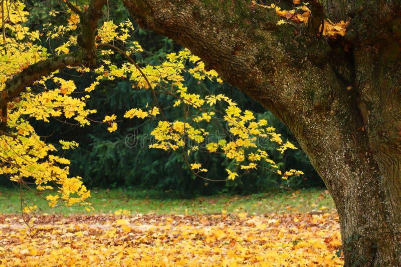 hösttree arkivfoto