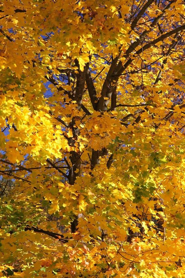 Download Hösttrees arkivfoto. Bild av slovakia, östligt, tree - 27283690