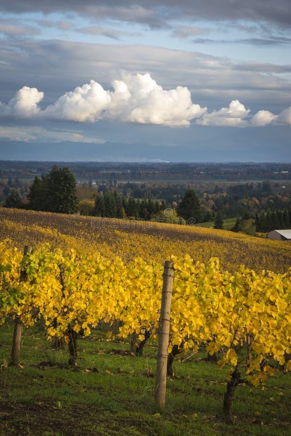 Höstvingårdar, Willamette dal, Oregon royaltyfri fotografi