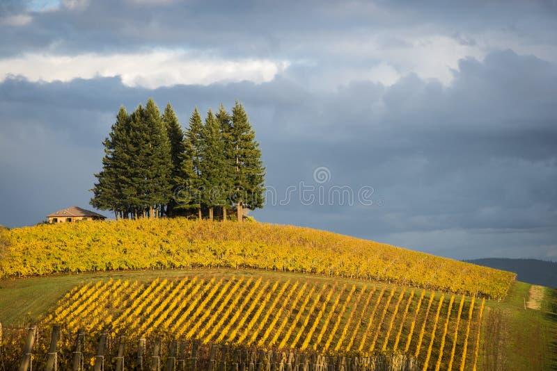 Höstvingårdar, Willamette dal, Oregon arkivbilder