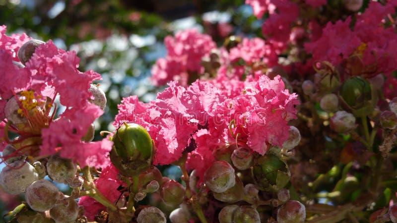 Hübsch und rosa lizenzfreie stockfotografie