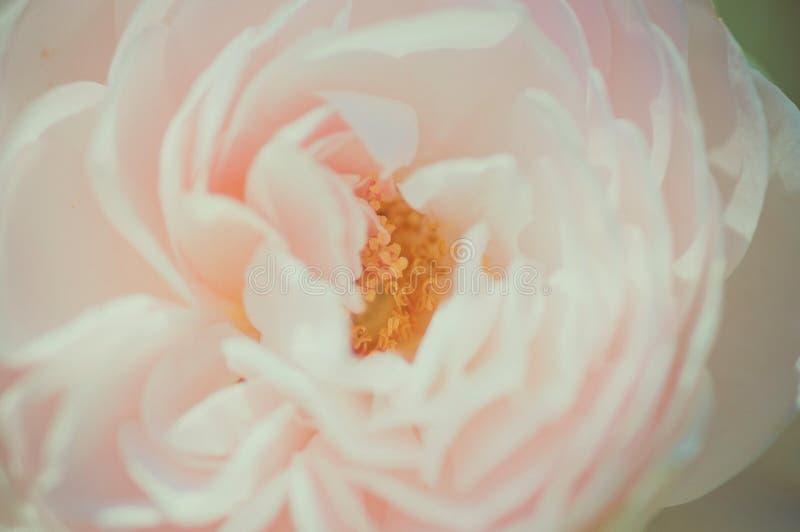 Hübsche Blume lizenzfreies stockfoto