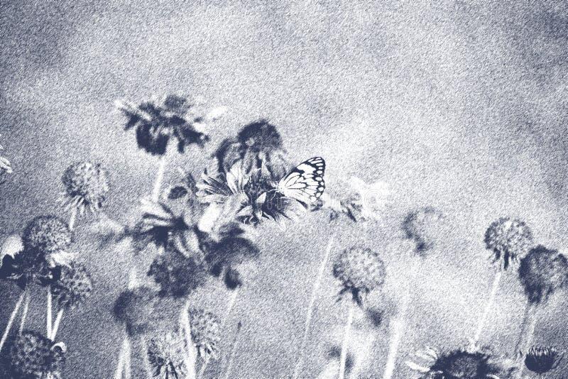 Hübsche Blumen Mit Schmetterling In Der Schwarzweiss ...