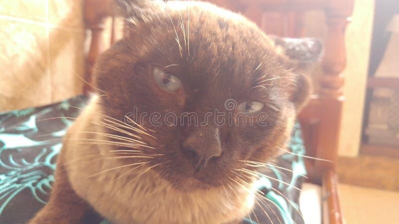 Hübsche Cat Looking To The Camera lizenzfreie stockbilder
