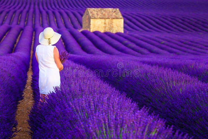 H?bsche Frau, die Natur auf den purpurroten Lavendelgebieten, Valensole, Frankreich genie?t stockfotografie