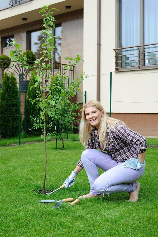 Hübsche Gärtnerfrau, die Apfelbaum pflanzt stockfotografie