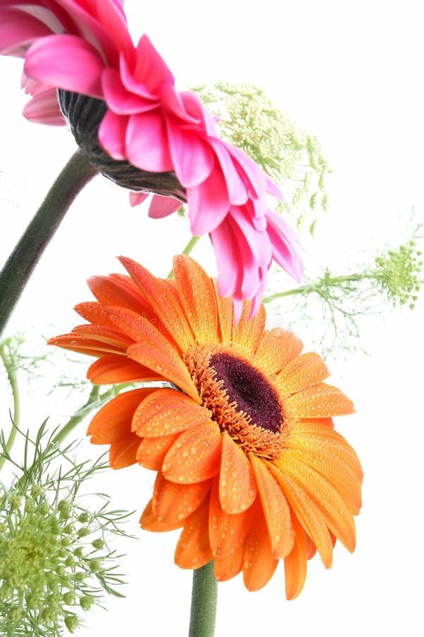 Hübsche Gartenblume auf Weiß lizenzfreies stockbild