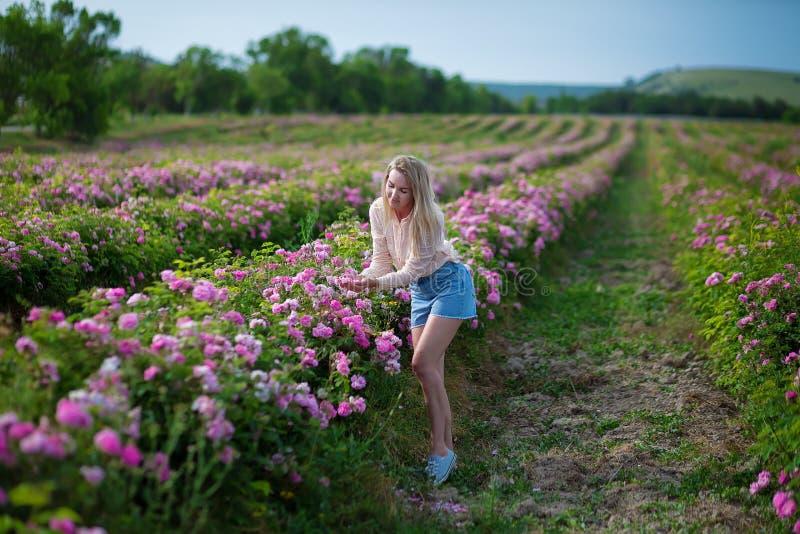 Hübsche junge zarte Frau, die auf dem Teerosengebiet geht Tragende Jeans blonder Dame und Retro- Hut genießen Sommertag stockfotos