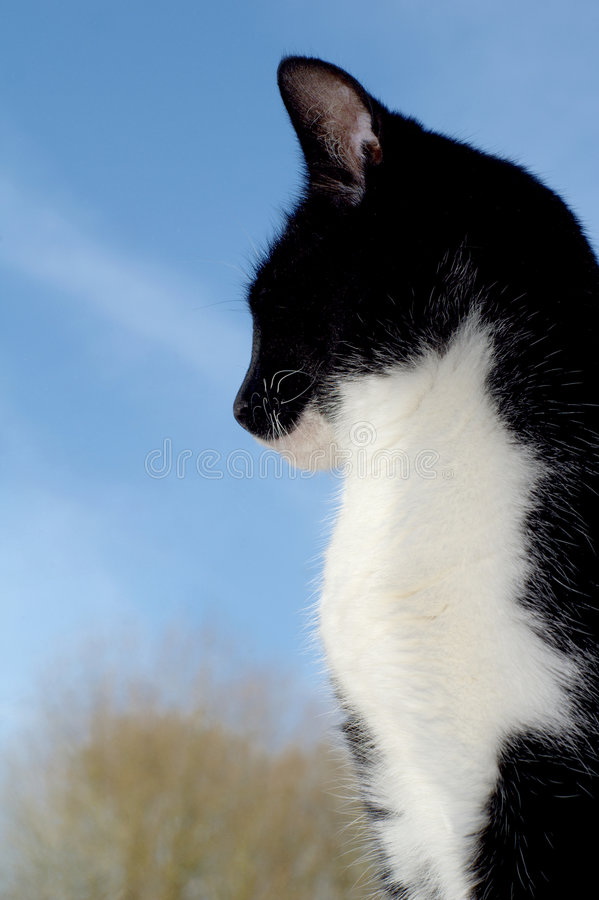 Hübsche Katze, die draußen schaut lizenzfreies stockfoto