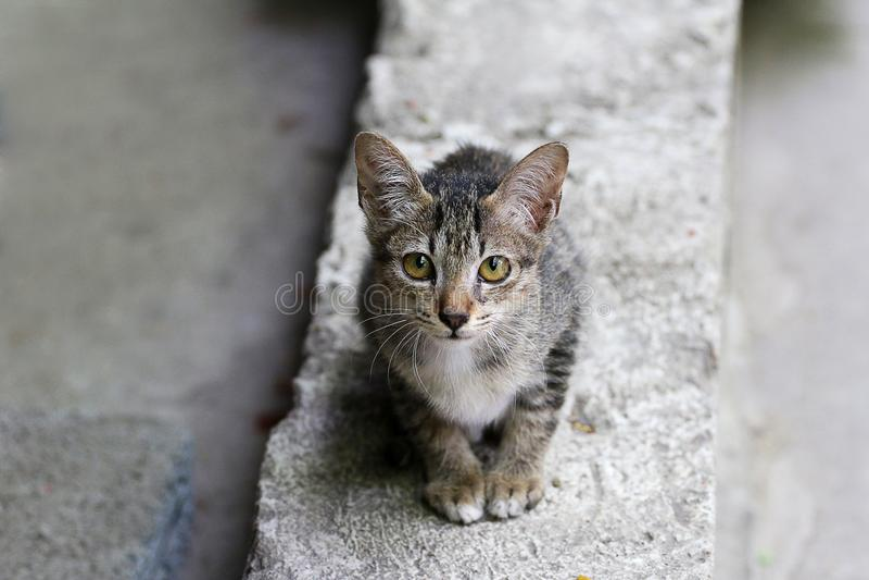 Hübsche Katze, wild lebende Tiere, schön, Miezekatze, Tier, Haustier, nett, Katze, reizende Katze lizenzfreie stockbilder